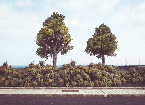 Lanzarote_Michael Clement 14