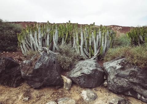 Lanzarote_Michael Clement 24
